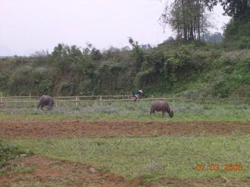 medium_Vietnam_2006_2_133.jpg