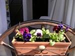 medium_fleurs_du_jardin_007.3.jpg