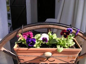 medium_fleurs_du_jardin_007.4.jpg