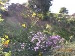 medium_fleurs_du_jardin_009.3.jpg