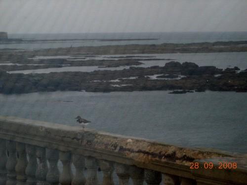 dadix portugal 2008 224.jpg