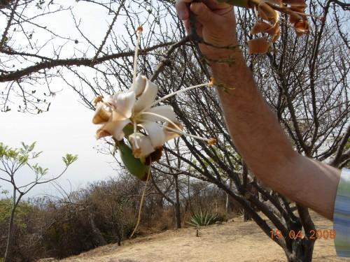 Mexico Avril 2009 306.jpg