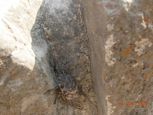 Mexico Avril 2009 292.jpg
