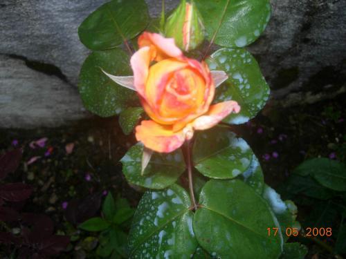 Jardin 2008 029.jpg