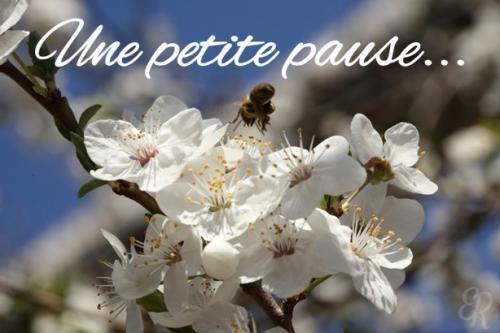 pause-PF.jpg