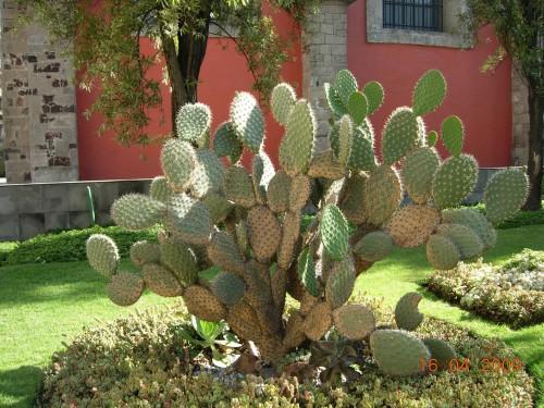 Mexico Avril 2009 506.jpg