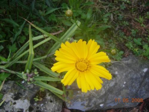 Jardin 2008 050.jpg