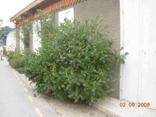 ferrret 2008 075.jpg