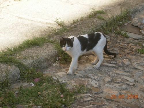 dadix portugal 2008 166.jpg