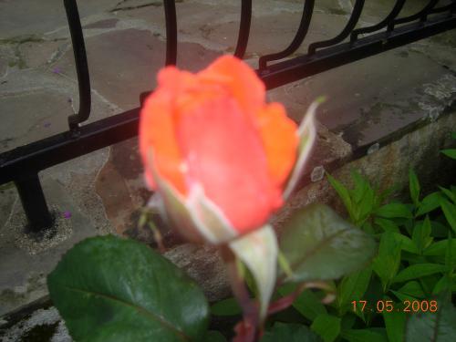 Jardin 2008 033.jpg