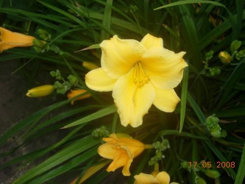 Jardin 2008 040.jpg