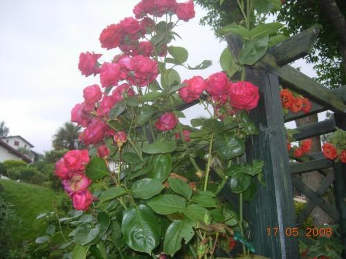 Jardin 2008 046.jpg