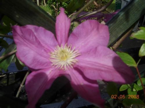 Jardin 2008 016.jpg
