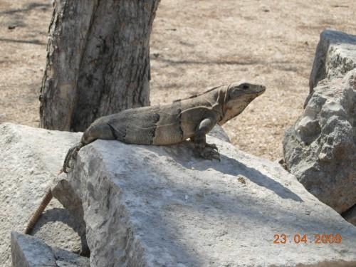 Mexico Avril 2009 105.jpg