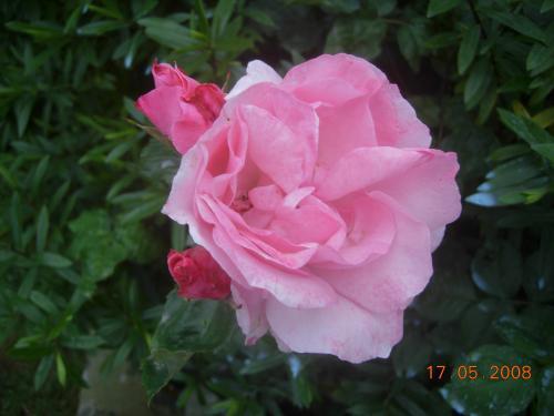 Jardin 2008 028.jpg
