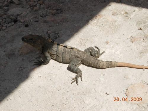 Mexico Avril 2009 108.jpg