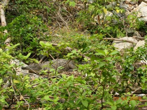 Mexico Avril 2009 234.jpg