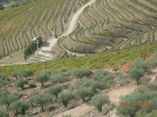 dadix portugal 2008 424.jpg