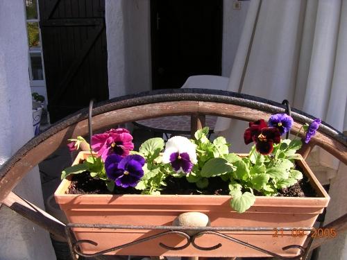 fleurs du jardin 007.jpg