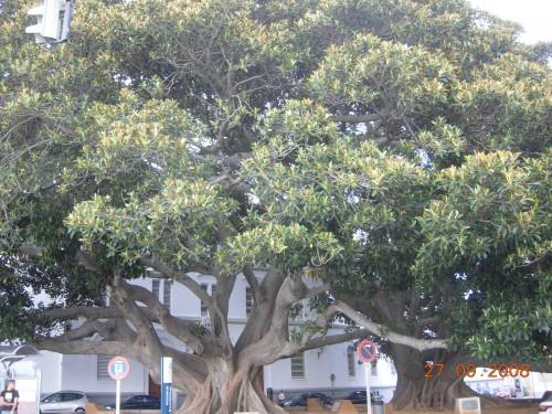 dadix portugal 2008 209.jpg
