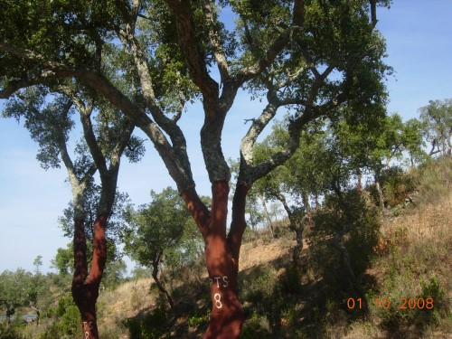 dadix portugal 2008 304.jpg