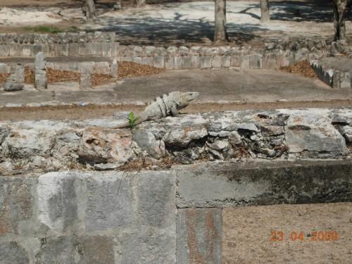Mexico Avril 2009 106.jpg