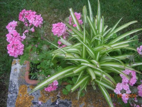 Jardin 2008 037.jpg